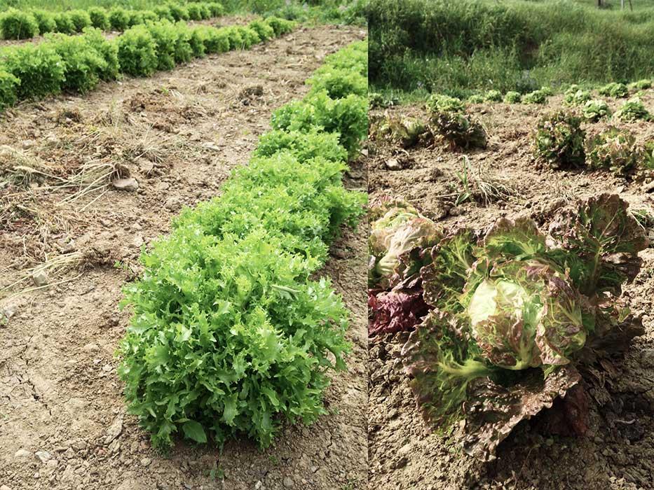 azienda_agricola_4