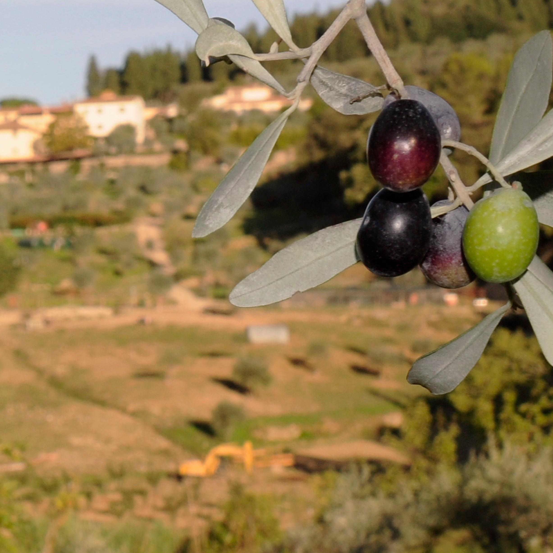 foto-con-olive