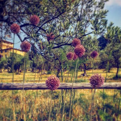 giardino-botanico-fattoria-di-maiano