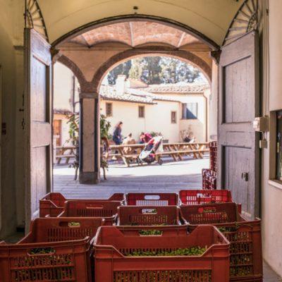 Raccolta Olive - Frantoio