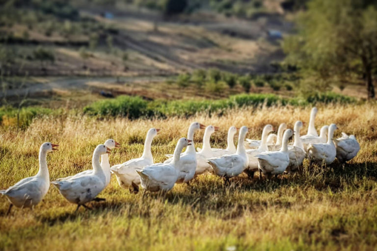 animali-in fattoria