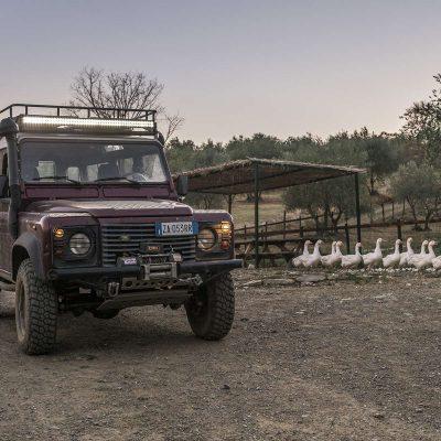 fattoria-di-maiano_safari-tour-fuoristrada (4)
